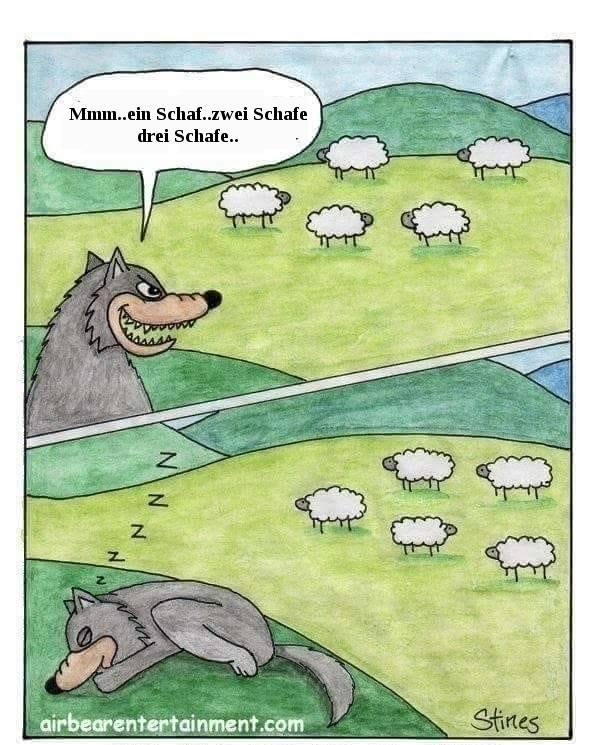 wolf der schafen zählt_n