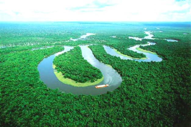 amazo forest