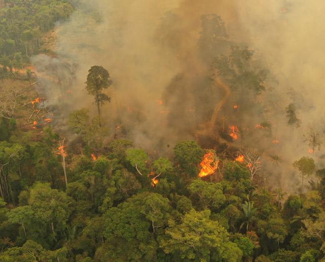 Amazonas-Feuer-Luftbild-