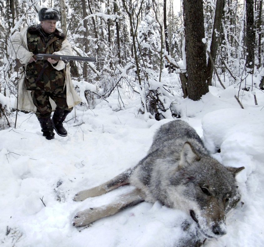 erscossener Wolf