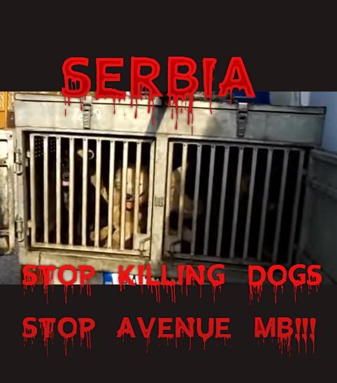 Goran serbia