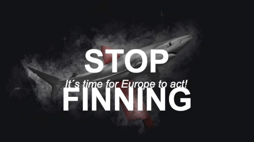 Haien-stopp finning Initiative