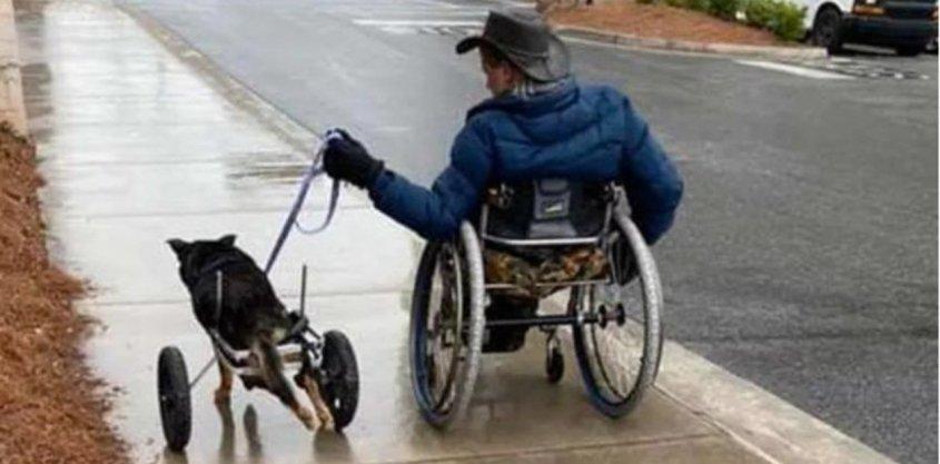 hund behindert im Rollstuhl1.webp