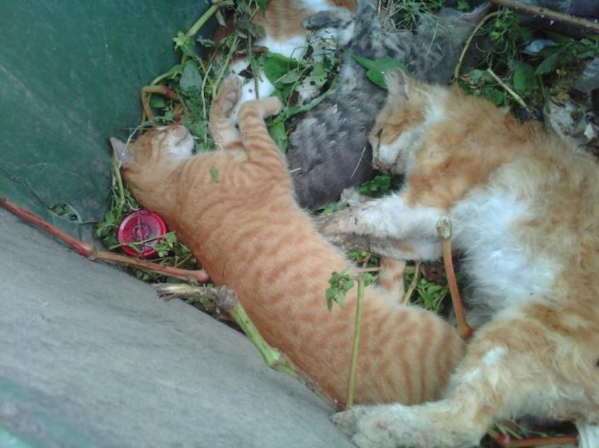 Katzen vergiftet in Kos