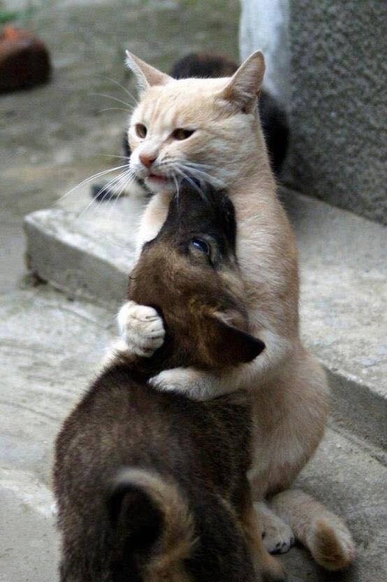 schönes Bild mit weisser katze und Welpe