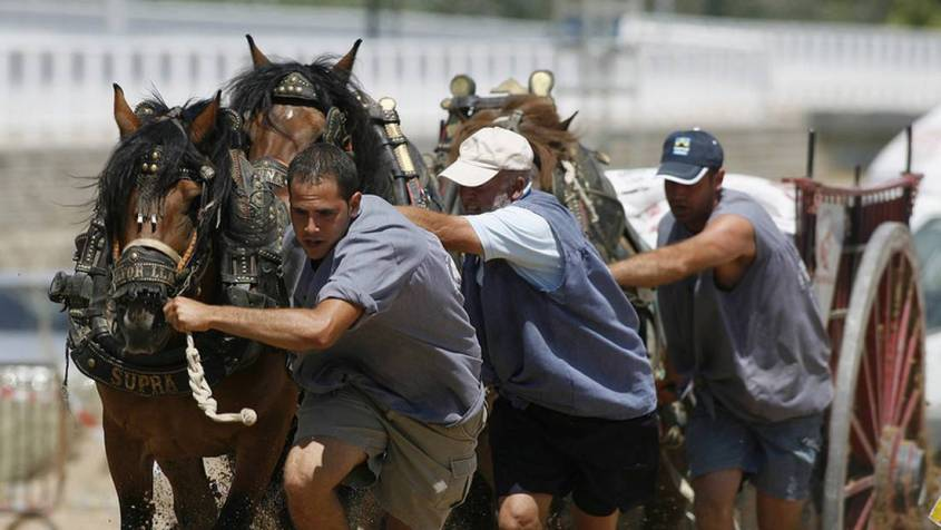 valencia Pferde Ziehen 2PG