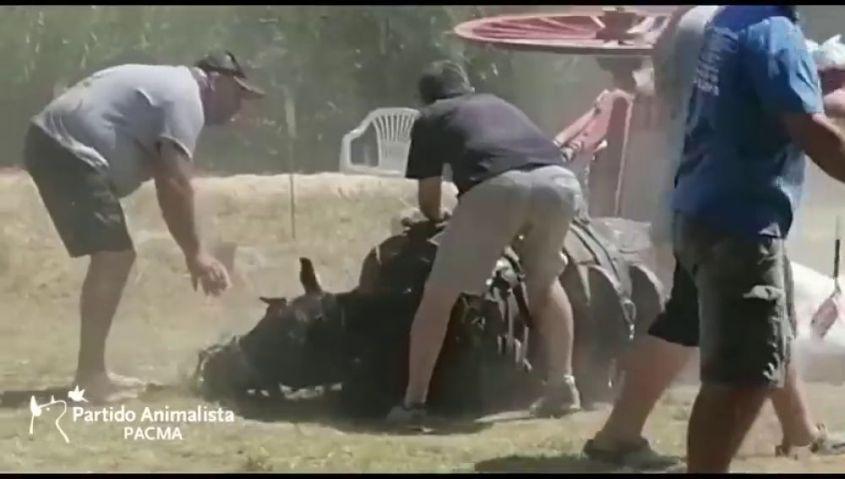 Valencia Pferde ziehen