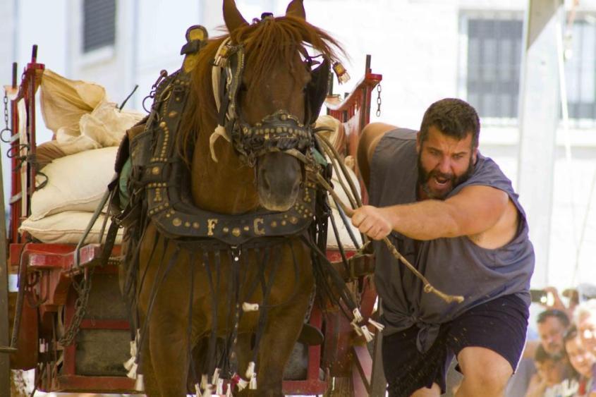 Valencia pferdeziehen 4jpg