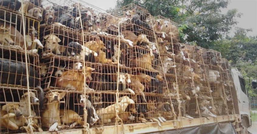 Image result for yulin dog meat festival 2019