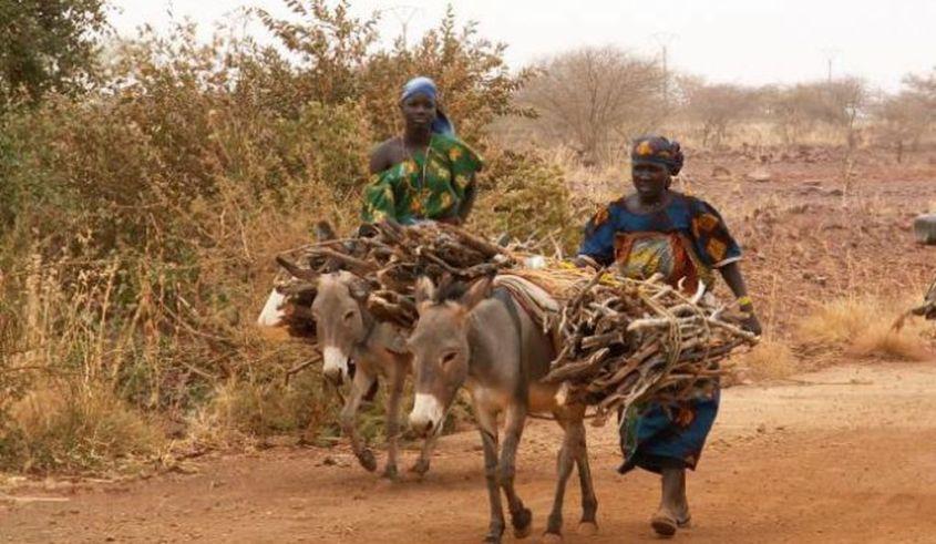 africa_frauen mit Eseljpg