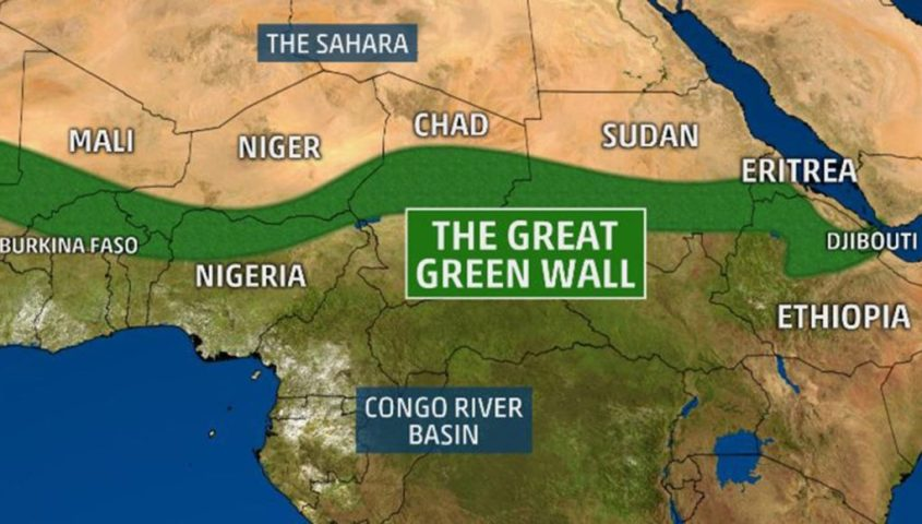 Afrika grünes wunder g