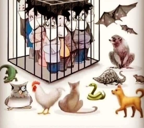 Corona_Cage
