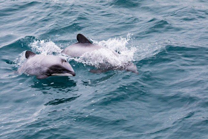 delphin in Venedikt pg