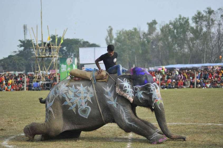 elephant festival Nepaljpg