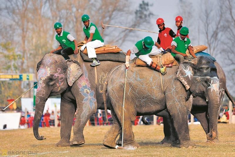 elephant-festival