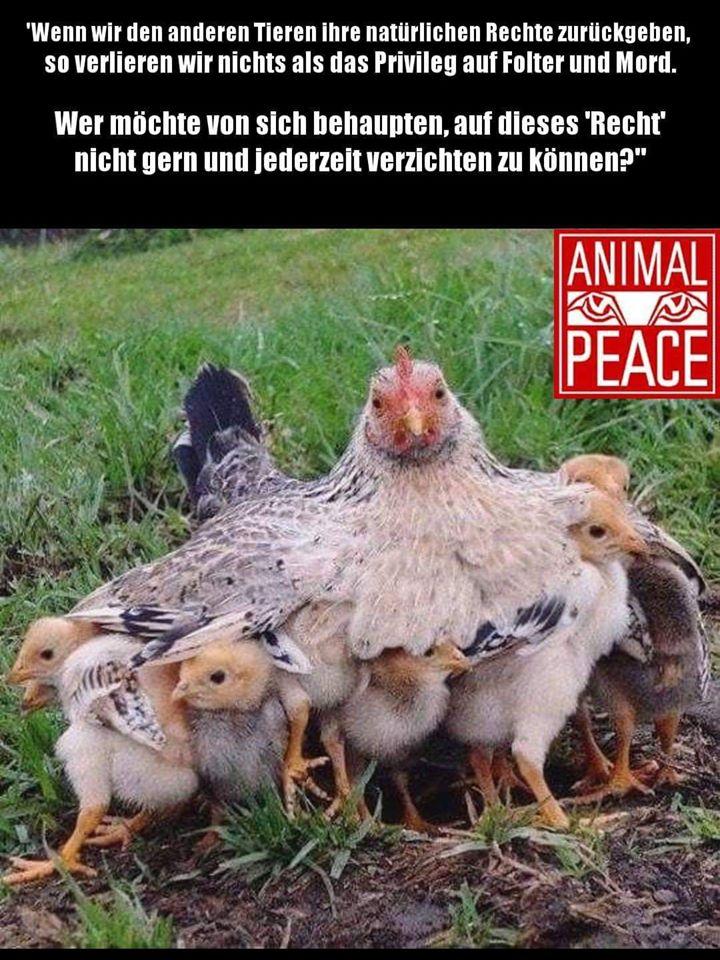 hühner mit Mama und spruchjpg