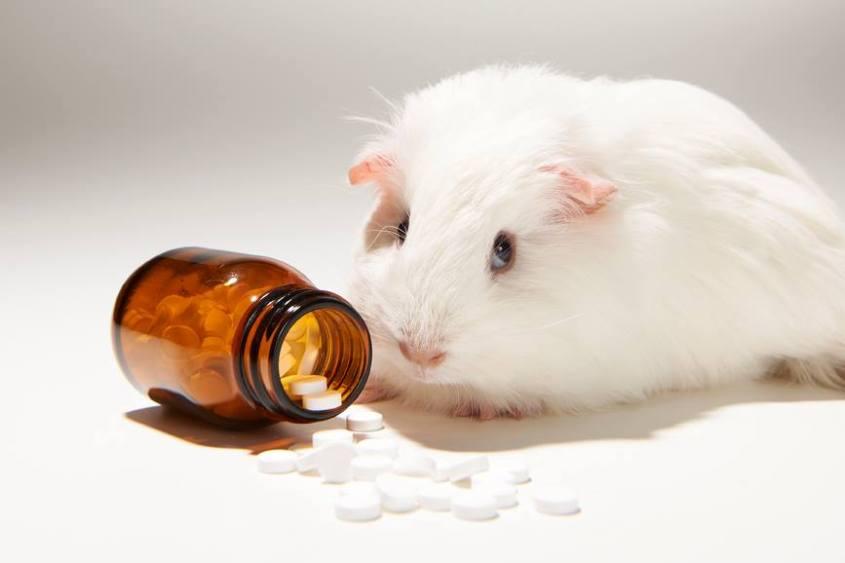 Maus mit Pillenjpg