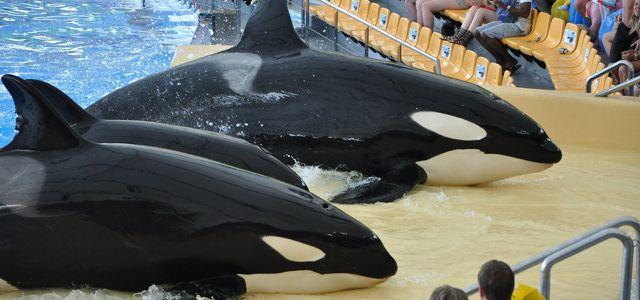 orca-schwertwal-1280x600
