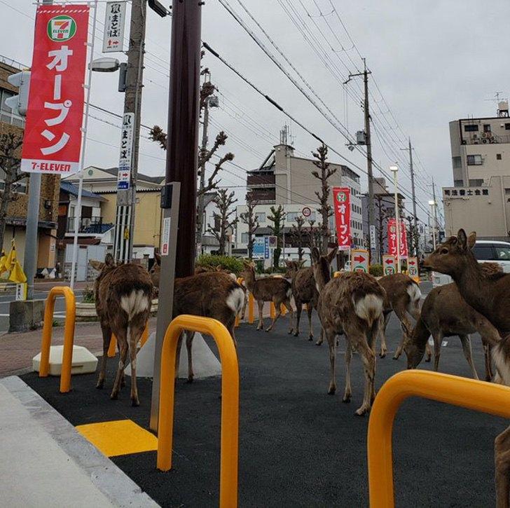 rehe in Japan pg