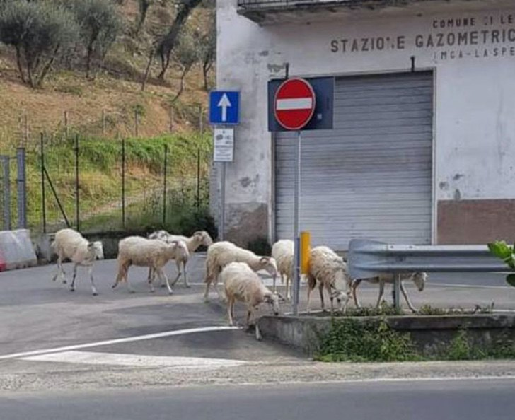 schaffen in Italienpg