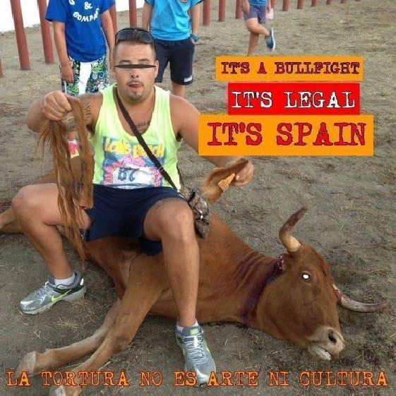 Spanier mit Stierschwanz in der Hand_n