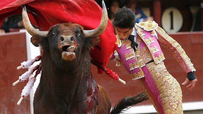 Stier und Matador