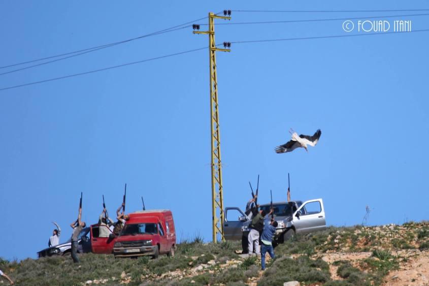 Storch beim erschiessen in Libanono