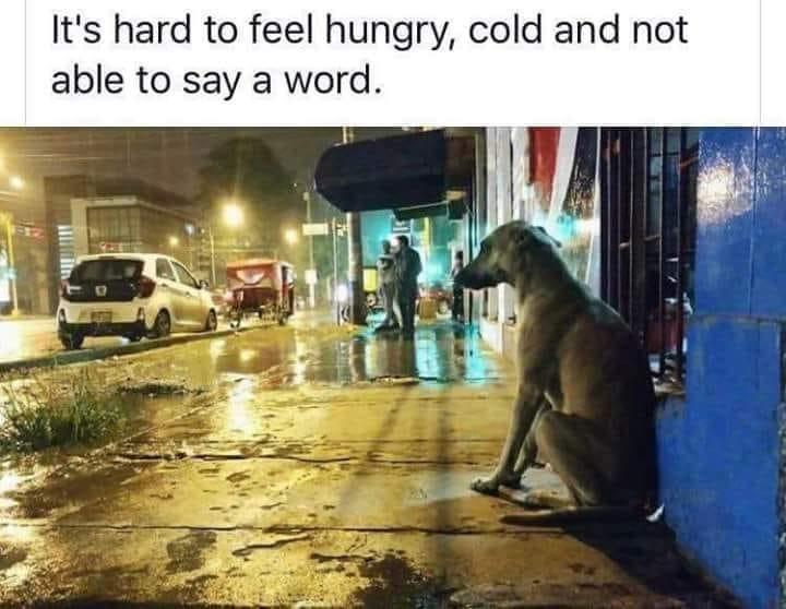 Streune Hund_n