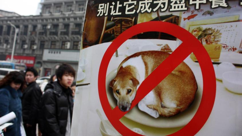 china verbot von Hunde essenpg