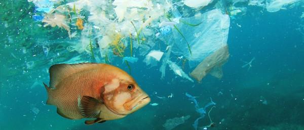 fisch in Müllpg