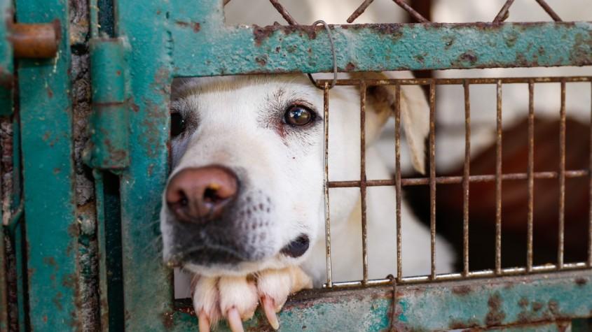 hund hinter shelter gitterjpg