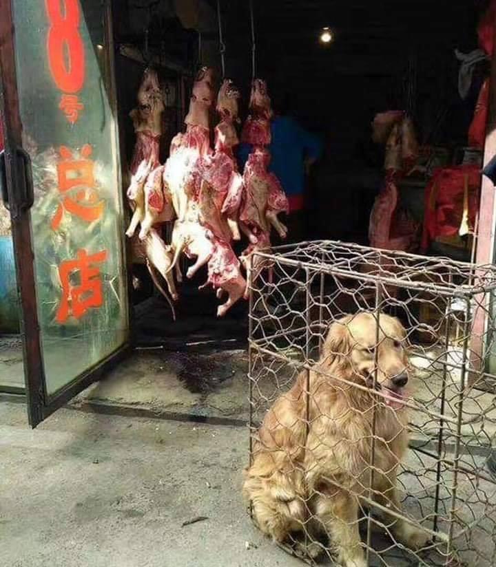 Hund im Kefig-China_n