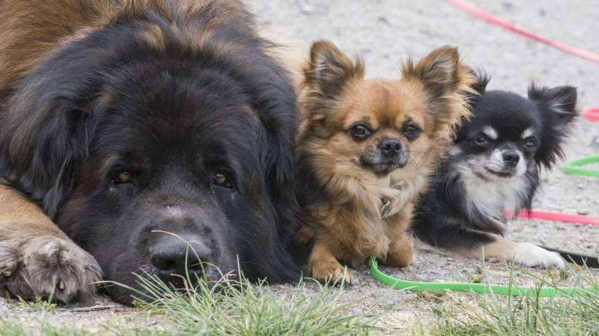 -hund-katze-haustier-corona-