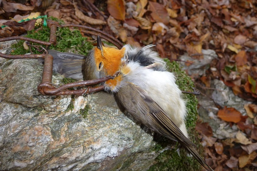 Komitee-gegen-Vogelmord-LBV