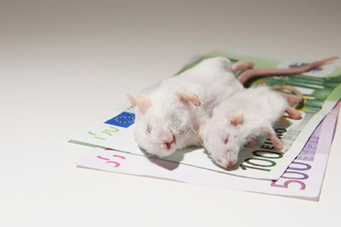 mäuser aufs geldn