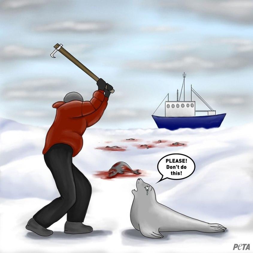Robben Karikatur