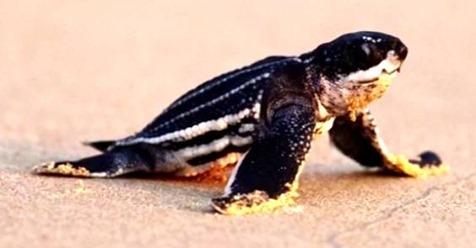 schildkröte pg