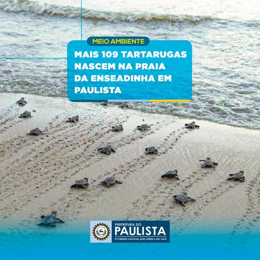 schildkrötern paulista
