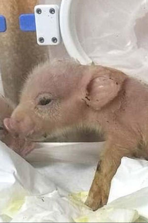 schweinchenjpg