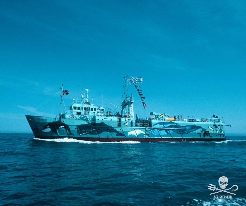 sea sheapard whales vor everjpg