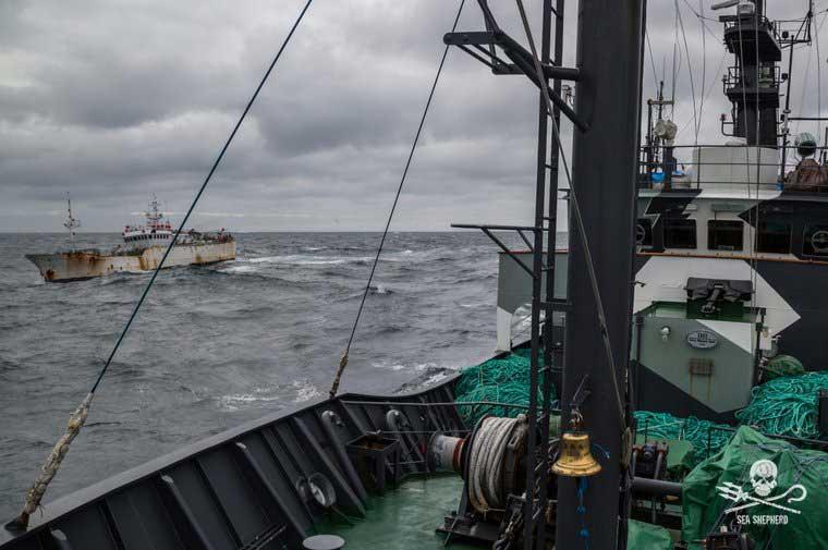 sea shepard 2