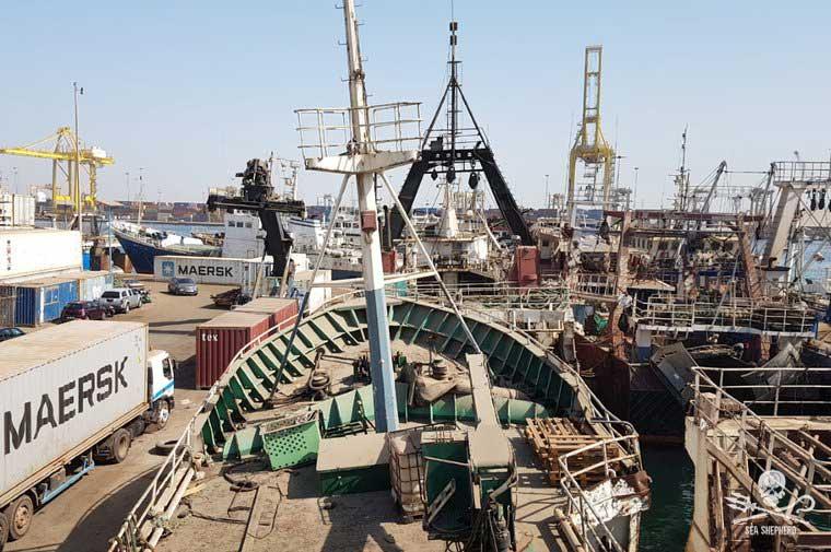 sea shepard kuhlun 4