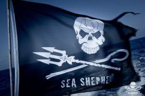 sea shepeard logojpg