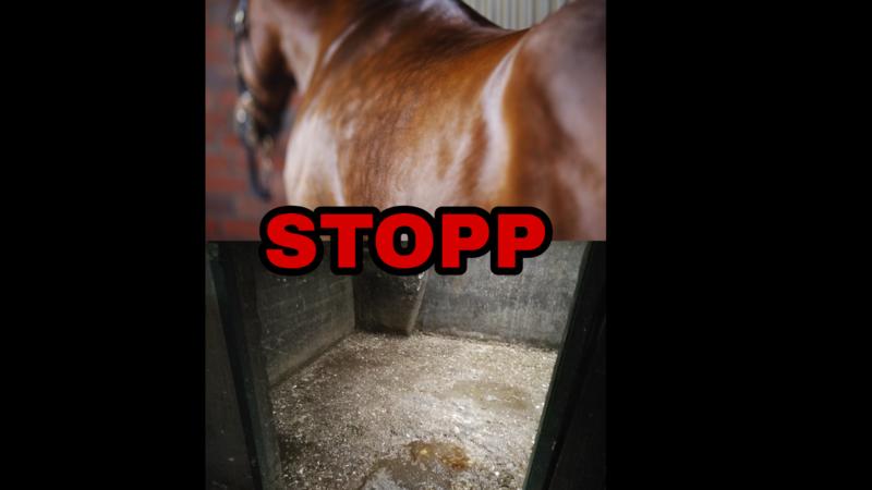 stop pferde rennenpg