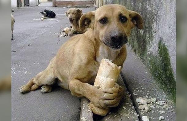 streuner Hund mit stück brot