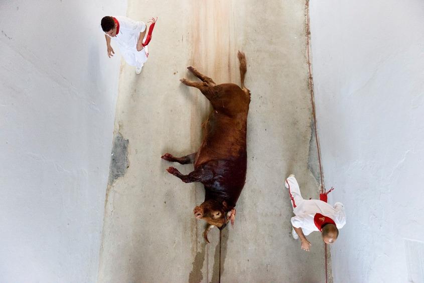 Tolles Foto mit Stier von oben