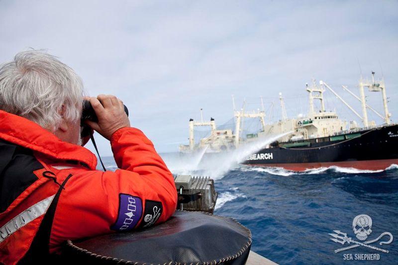 walenfang sea sheapard
