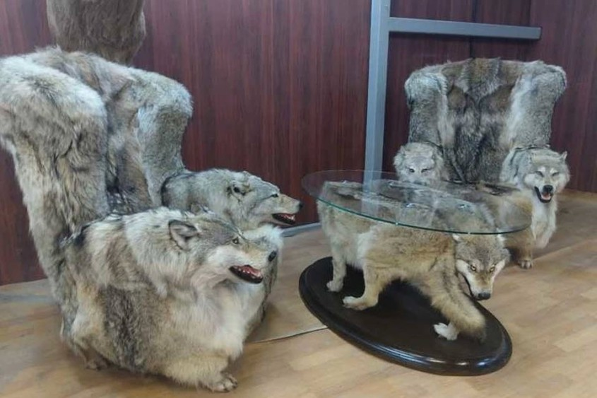 Wolf-trophäenrussisch