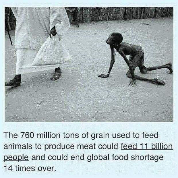 Zitat über Welthunger