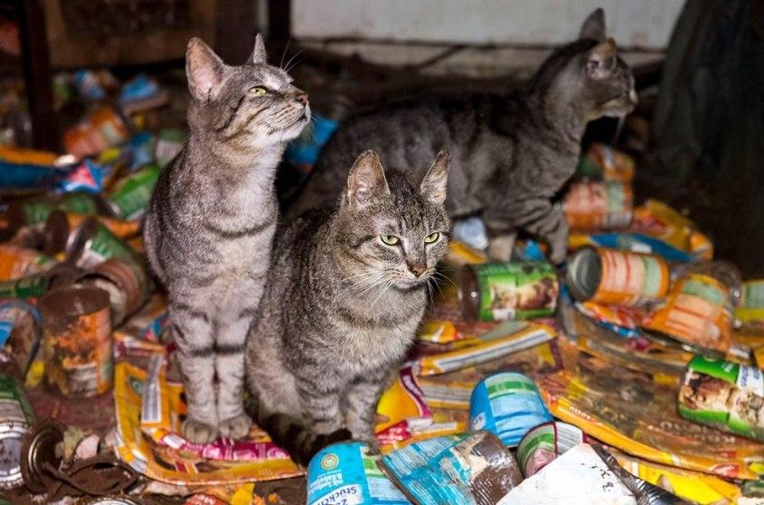 animal hoarding c-PETA-D